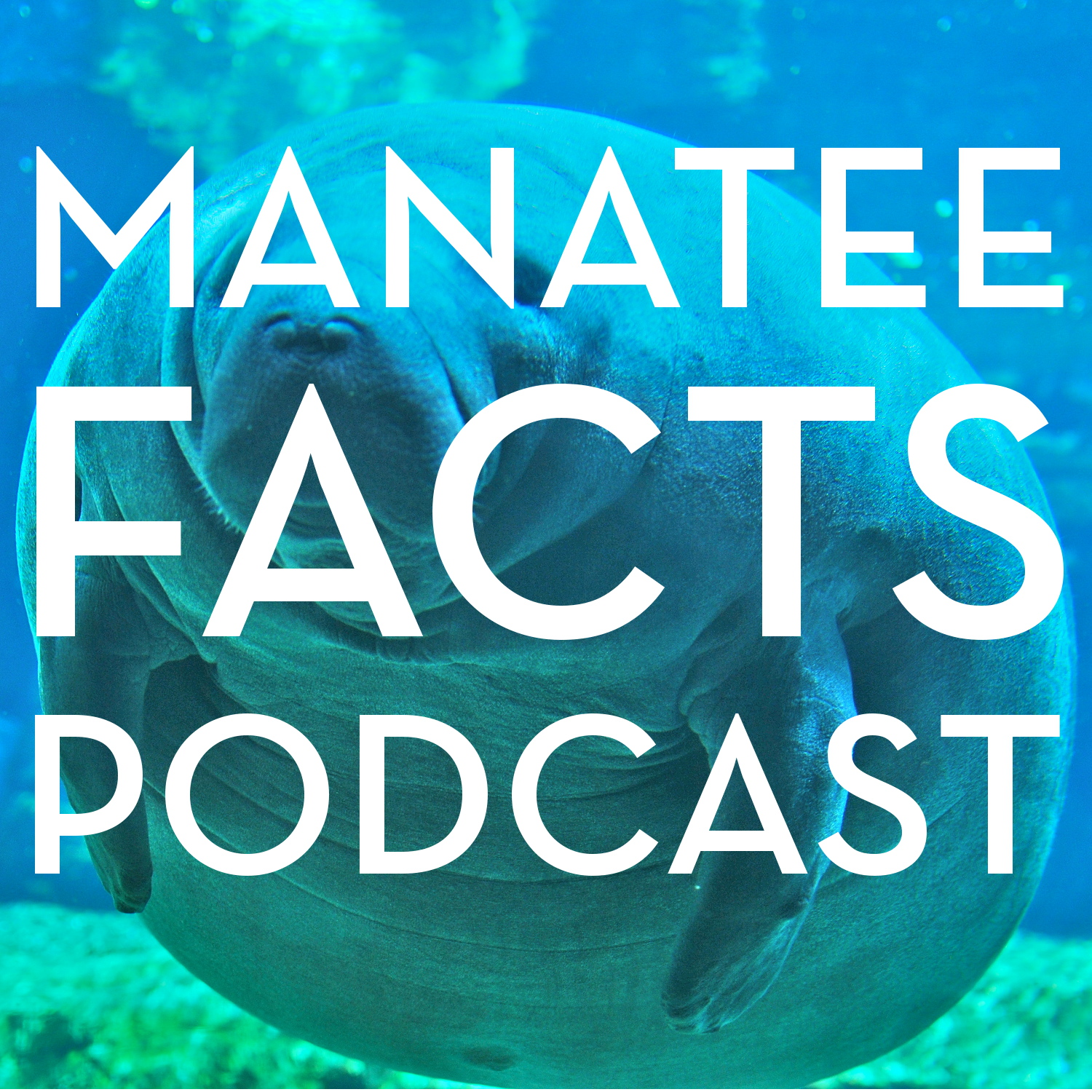 Manatee Facts Podcast